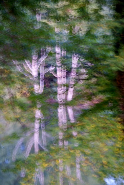 Accidental gorgeous shot of tree reflections